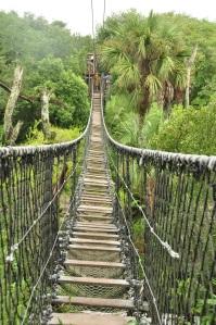 Wild Africa Trek 025
